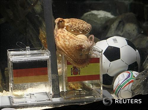 [2010WC]예언하는 문어 '스페인, 독일 이긴다'