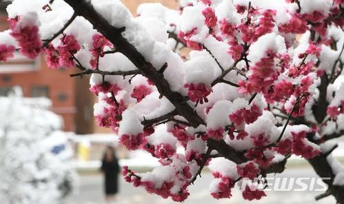 '겨울과 봄의 공존'