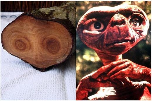 영화 속 'ET' 닮은 나무 나이테 발견