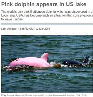 인형아냐? 희귀 '핑크 돌고래' 발견