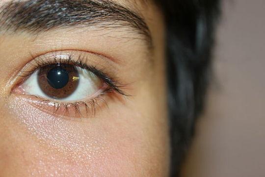 [환경뉴스] 치타와 매는 왜 눈이 큰가, 그리고 사람은?