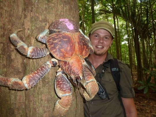 crab1_59_20121115170002