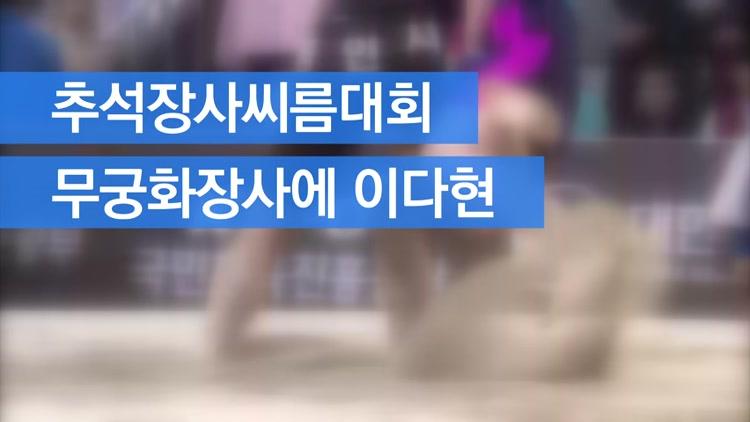 [자막뉴스] 추석 장사씨름 이다현, 시즌 첫 장사 등극