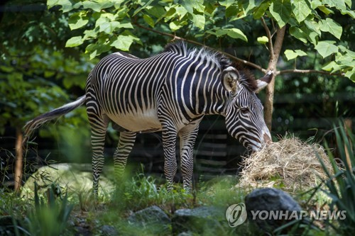 USA NATIONAL ZOO OPEN - 포토뉴스