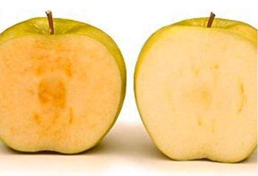 la mela genetica con un gene soppresso non annerisce, diventa marrone solo se marcisce