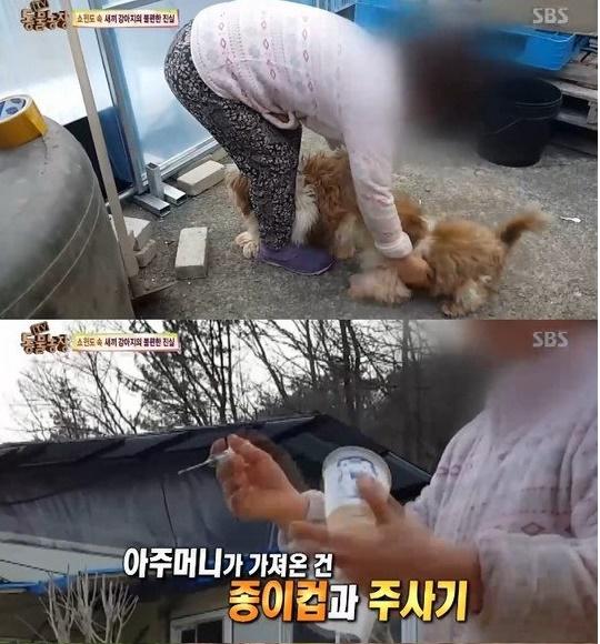 '동물농장' 강아지공장 주인, 주사기와 종이컵 들고…강제 교배 상황보니? '끔찍'