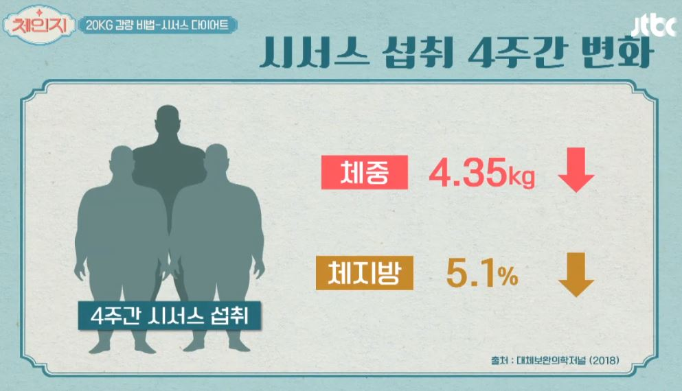 선인장 닮은 '시서스 실험' 다이어트 효과 입증? '시서스가루' 효능 부작용, 시서스 복용법 어떻게 먹나