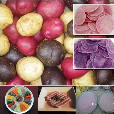 알록달록 색깔 감자 '자영'·'홍영' 요리하기