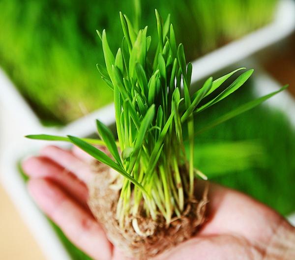 집·사무실에서 간편히... 자연치유 반려식물 5
