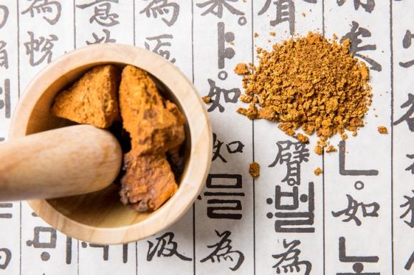 차가버섯 효능과 차가버섯 분말 먹는 방법은? 뚱보균 잡는 차가버섯 차 끓이는 법까지 총정리