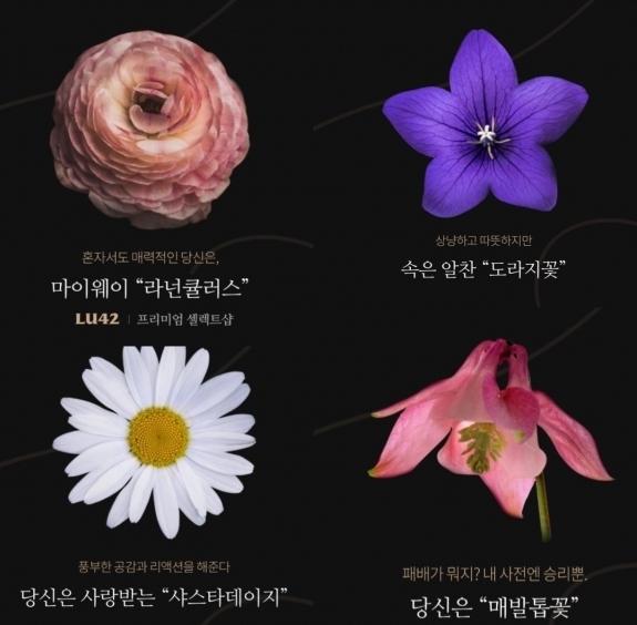 `꽃 MBTI 테스트` 어디서 확인?... 온라인 뜨겁게 달군 한 장의 사진 `화제 만발`