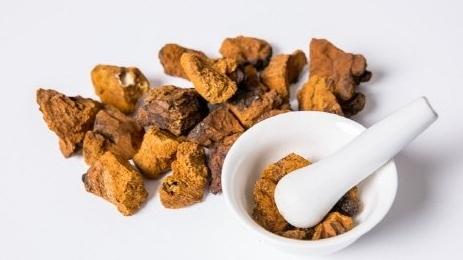 뛰어난 효능의 차가버섯으로 만든 차가버섯분말 차가버섯차 효능은?