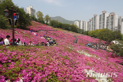 수도권 대표 봄꽃축제 '군포 철쭉주간' 성료