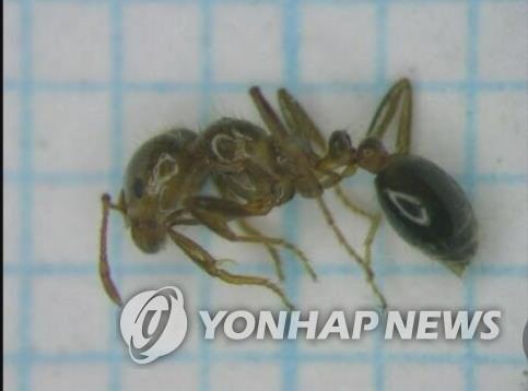 日서 맹독성 불개미 또 발견···도쿄 이어 요코하마서 확인