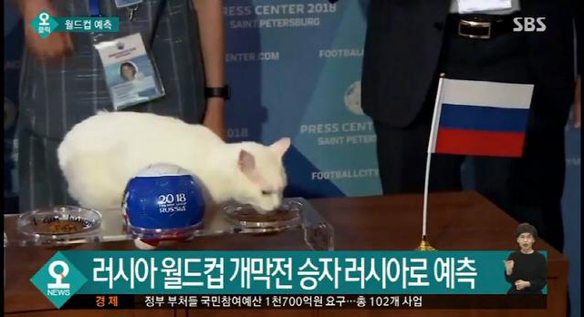 러시아월드컵 개막전 승리는 러시아 '점쟁이 고양이' 예측 맞을까
