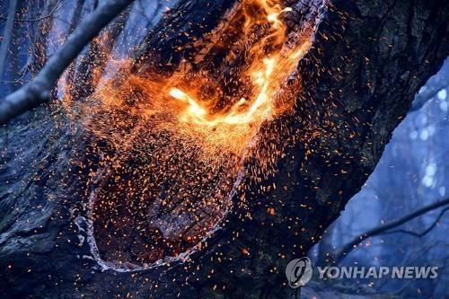 도계 산불 잿더미 된 규모만 축구장 164개