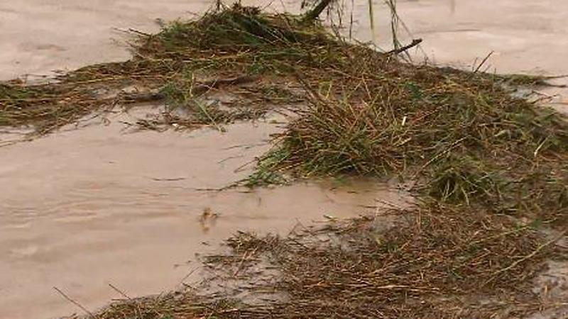 수도권 천둥번개 '기습 폭우'…급류에 휩쓸린 남성 사망
