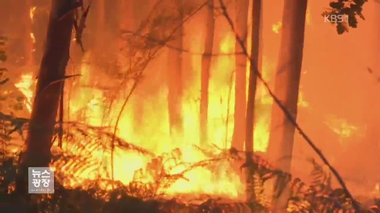 포르투갈 대형 산불…60여 명 사망