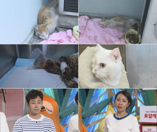 '동물농장' 실검 1위, 길고양이 학대사건 범인 누구…앞발 자르고 얼굴 지지고