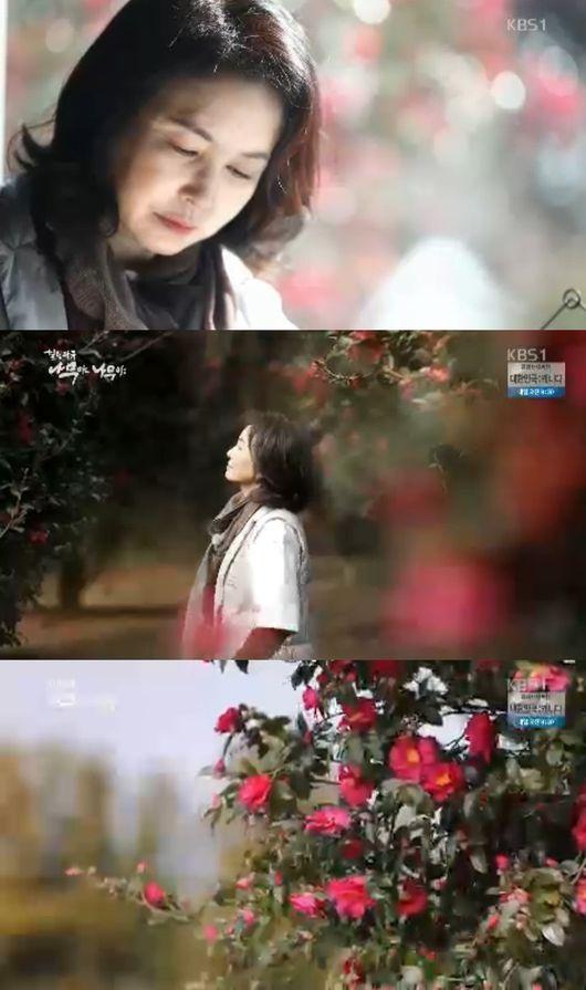 `나무야` 김미숙, 제주남원 동백나무 숲行‥¨너무 예뻐¨ 감동