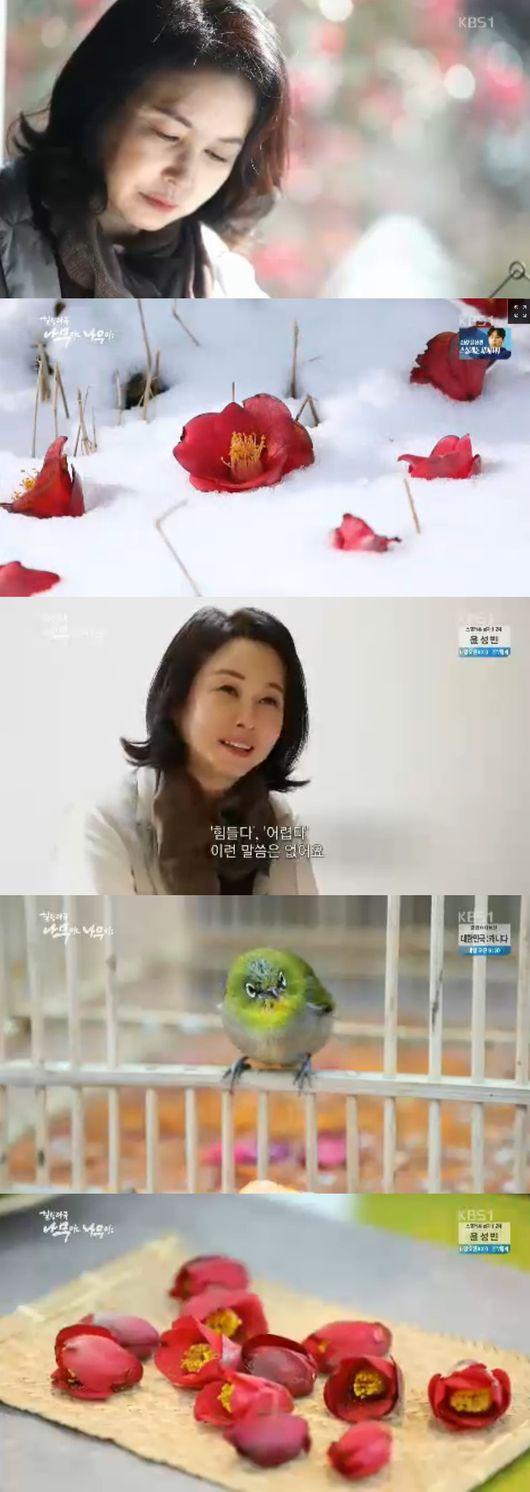 `나무야나무야` 김미숙, 겨울의 꽃 `동백나무`와 떠난 `힐링`여행 [종합]