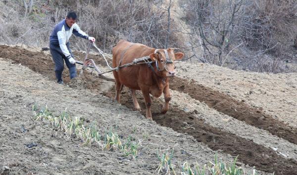 [이런 오늘] 네 번째 절기 춘분(春分), 오늘 날씨로 농사 길흉 알 수 있다?
