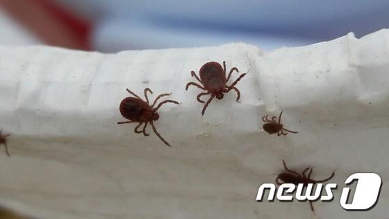 경북서 야생진드기 감염병 SFTS로 1명 숨져