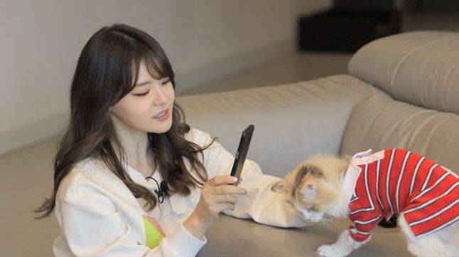 '개밥남' 15년차 반려묘 집사 서유리의 '5냥 하우스'