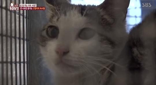 '동물농장' 마트 습격해 특정 사료만 훔쳐먹는 고양이의 비밀