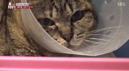 '동물농장' 뇌손상으로 비틀대던 고양이, 새 가족 찾았다