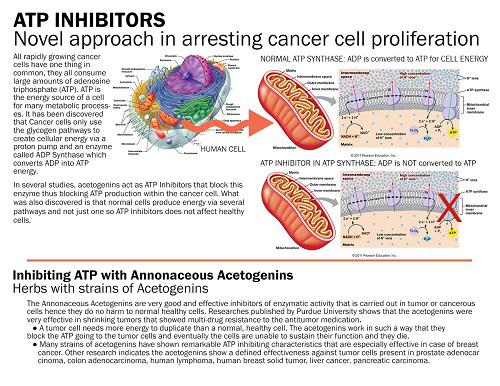 암세포의 대사 에너지 차단한다, 대사항암 제네픽