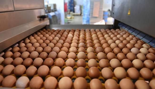 국산 계란서도 '살충제' 검출…오늘부터 출하 금지