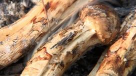 '한국인의 밥상' 소백산 자락(영월+단양+영주) 능이, 송이, 까치 버섯꾼들의 삶이 담긴 버섯밥상