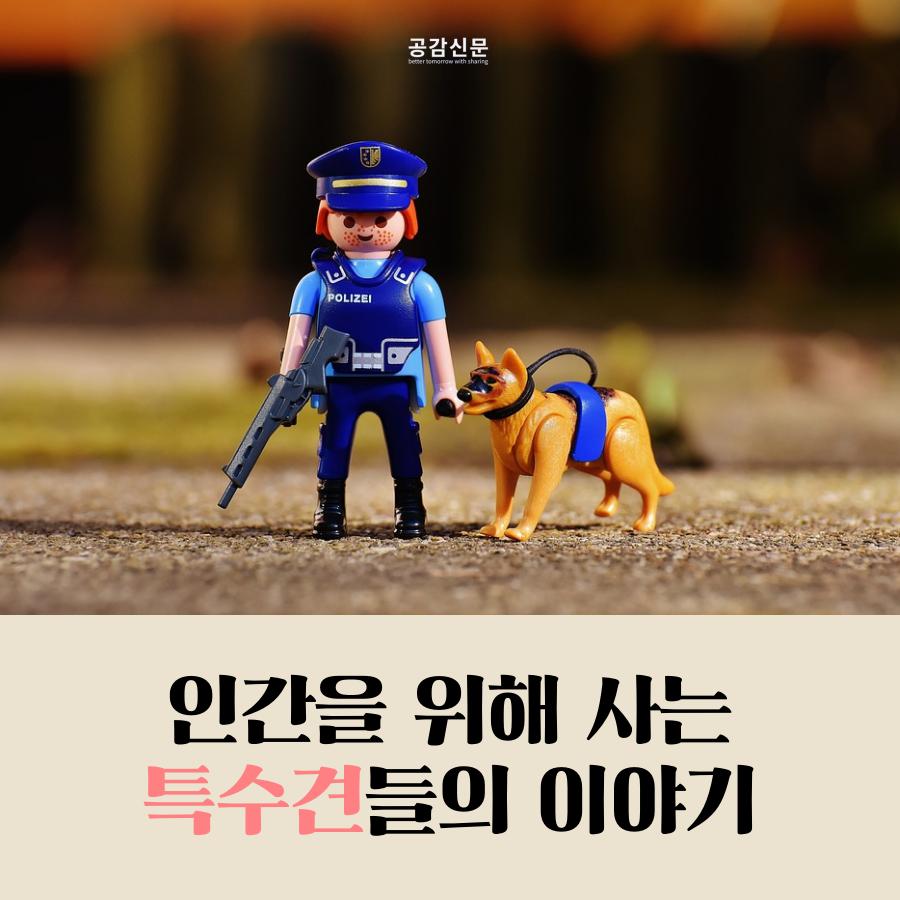 [공감신문] 인간을 위해 사는 특수견들의 이야기