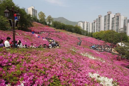 `2018 군포철쭉축제`에 45만명 찾아…역대 최고 방문인원 기록