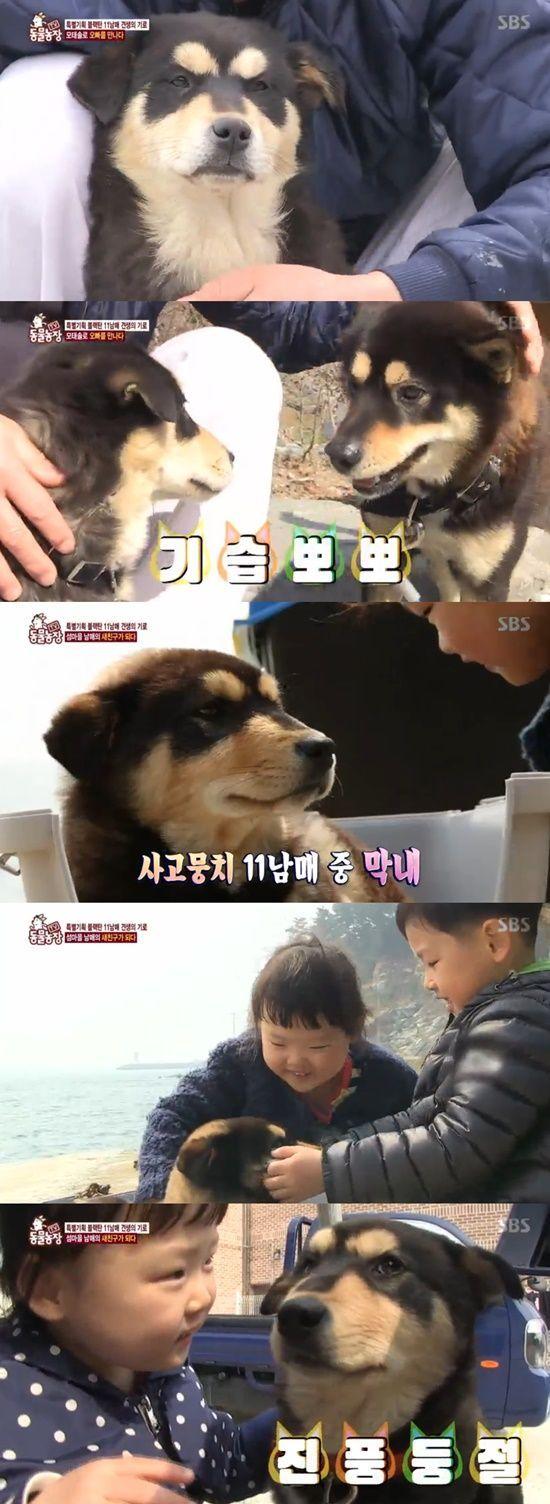 '동물농장' 블랙탄 11남매, 모태솔로 犬·섬마을 남매 새 친구 되다 [TV캡처]