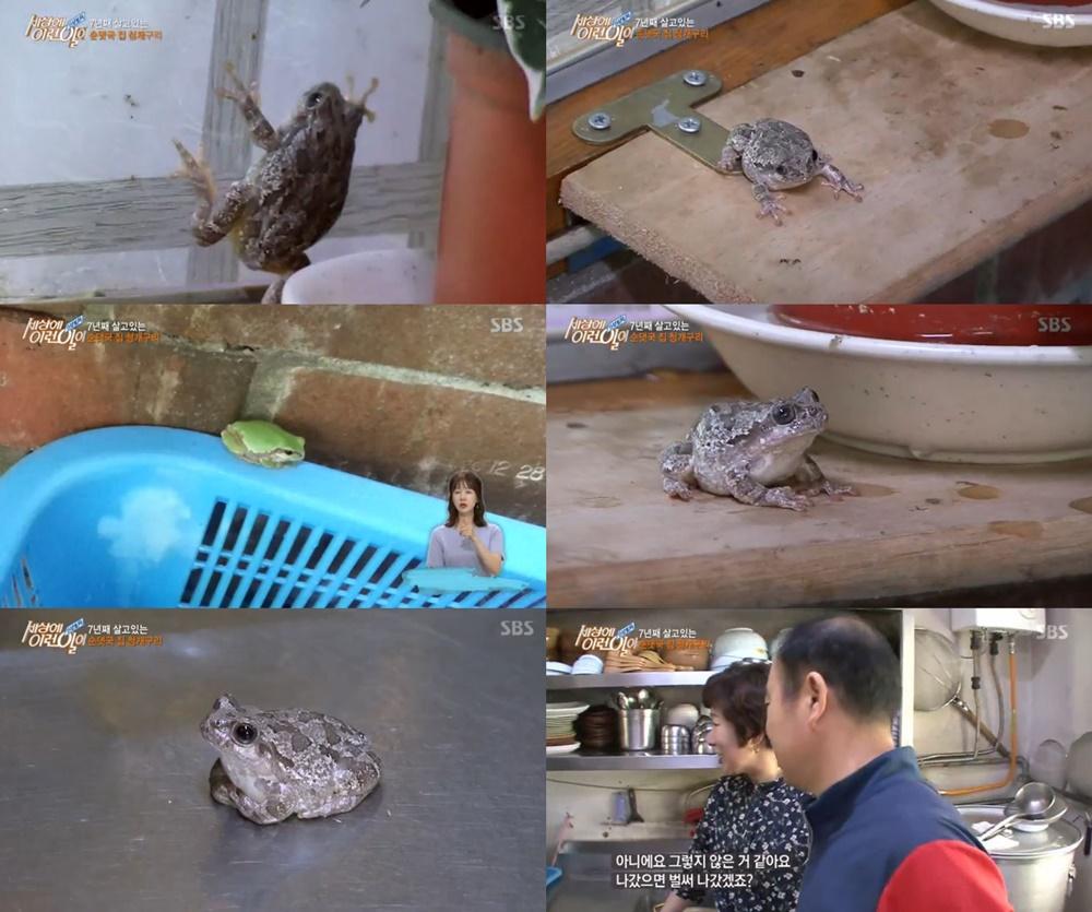 '순간포착 세상에 이런일이' 7년 동안 동거…순댓국집 청개구리 복덩이의 미스터리