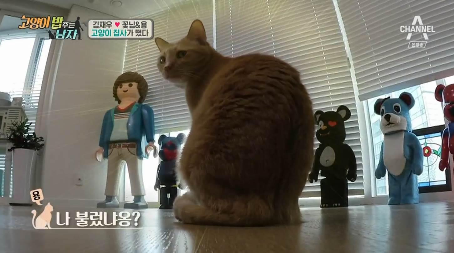 [TV컷Q] '개밥 주는 남자 시즌2' 김재우, 반려묘 꽃님이와 용이의 집사로 등장