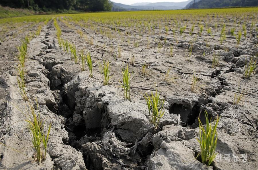 농민 울리는 가뭄 당분간 끝날 기미 없다