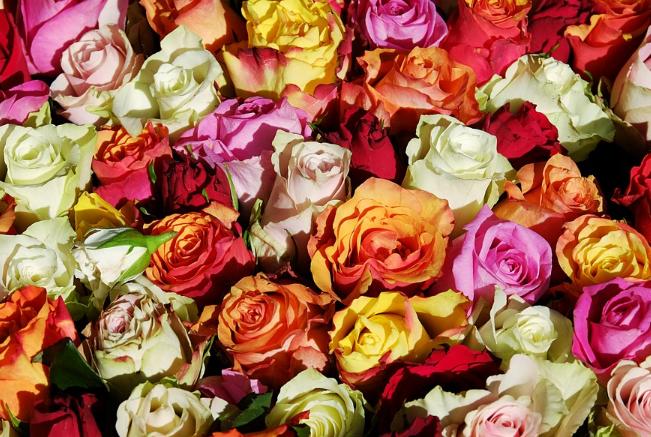"""오늘 `로즈데이`...""""연인에게 주지 말아야 할 장미 색깔은"""""""