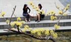 '사계절 다 겪은' 4월초 요란한 날씨…황사·강풍까지