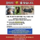 친누나가 공개한 故 종현 '실종' 반려견의 최근 목격 위치