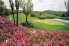 '골프의 섬, 제주' 올해 21개 국내․외 대회 유치