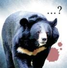 지리산 반달곰과 도심 멧돼지
