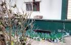 음주 파티·묻지마 헌팅… 악몽이 된 '무법 게스트하우스'