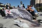 법도 사람도 무력했다…고래고기 21톤이 사라졌다