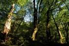 지름 2m 삼나무 수만 그루가 수백년째 자태를 뽐내는 곳