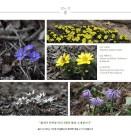 백두대간수목원서 봄을 알리는 '노루귀' 꽃 피운다