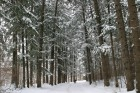 [기타뉴스][알아보니]차례 지내고 어디 갈까···막바지 겨울정취 느낄 숲길 어때요