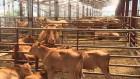 사육 환경 개선 목적…'가축 행복 농장' 첫 지정